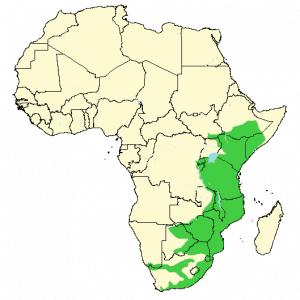 Vervet Monkey - Chlorocebus pygerythrus - Distribution map