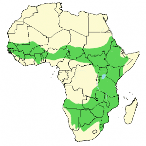 White-Backed Vulture - Gyps africanus - Distribution Map