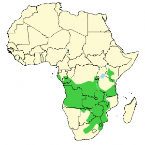White-Fronted Bee-Eater - Merops bullockoides - Distribution Map