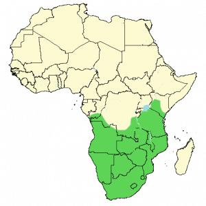 African Hoopoe - Upupa africana - Distribution Map