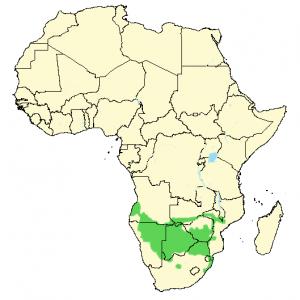 Banantoko - Tockus leucomelas - Utbredelse