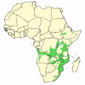 Crowned Hornbill - Lophoceros alboterminatus - Distribution Map