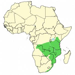Trumpeter Hornbill - Bycanistes bucinator - Distribution Map