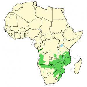 Blåastrild - Uraeginthus angolensis - Utbredelse