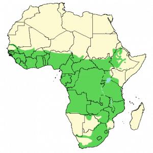 Giant Kingfisher - Megaceryle maxima - Distribution Map
