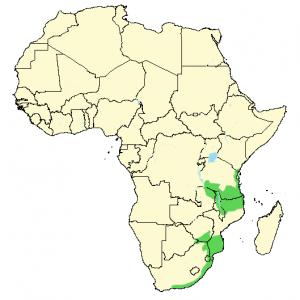 Green-Backed Camaroptera - Camaroptera brachyura - Distribution Map