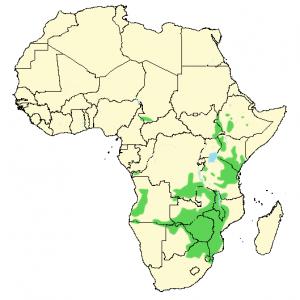 Jameson's Firefinch - Lagonosticta rhodopareia - Distribution map