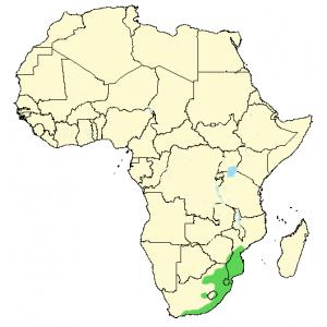 Natal Green Snake - Philothamnus natalensis - Distribution Map