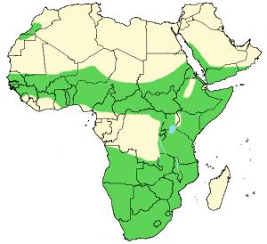 Puff Adder - Bitis arietans - Distribution Map