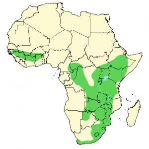Red-Lipped Snake - Crotaphopeltis hotamboeia - Distribution Map