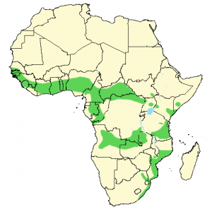 Square-Tailed Drongo - Dicrurus ludwigii - Distribution Map