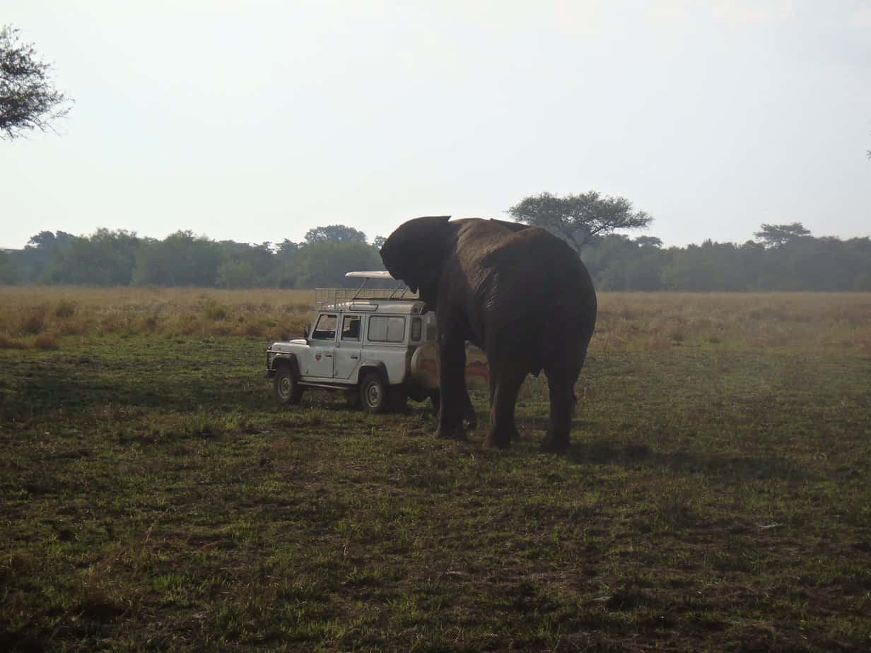 A scary elephant encounter in the Serengeti