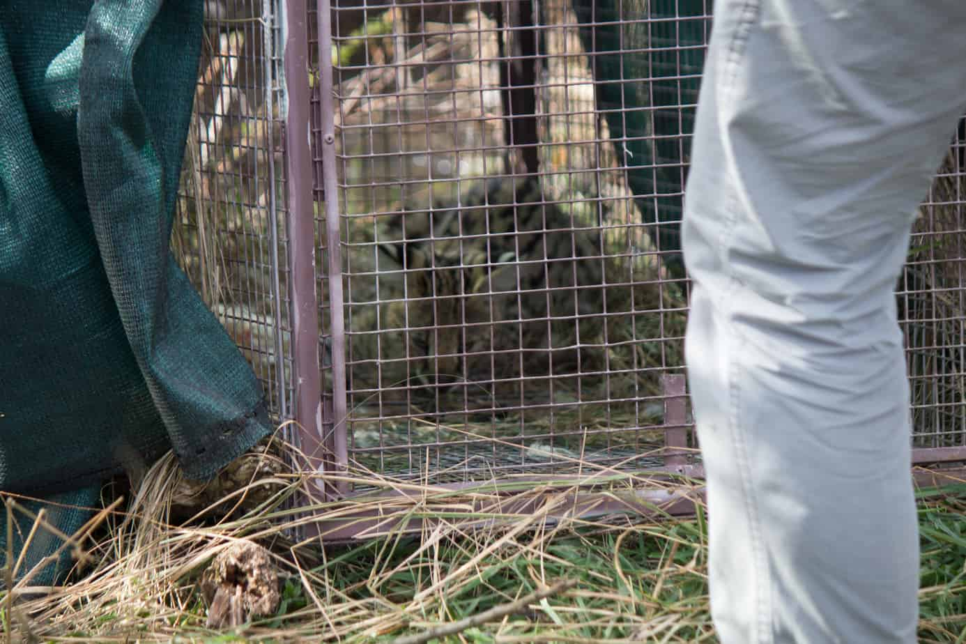 IMG 9035 1 - Servals & Caracals, Oh My!