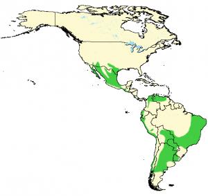 Harris's Hawk - Parabuteo unicinctus - Distribution Map
