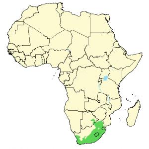 Cape White-Eye - Zosterops virens - Distribution Map