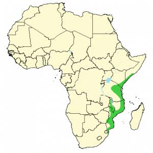 Red Bush Squirrel - Paraxerus palliatus - Distribution Map