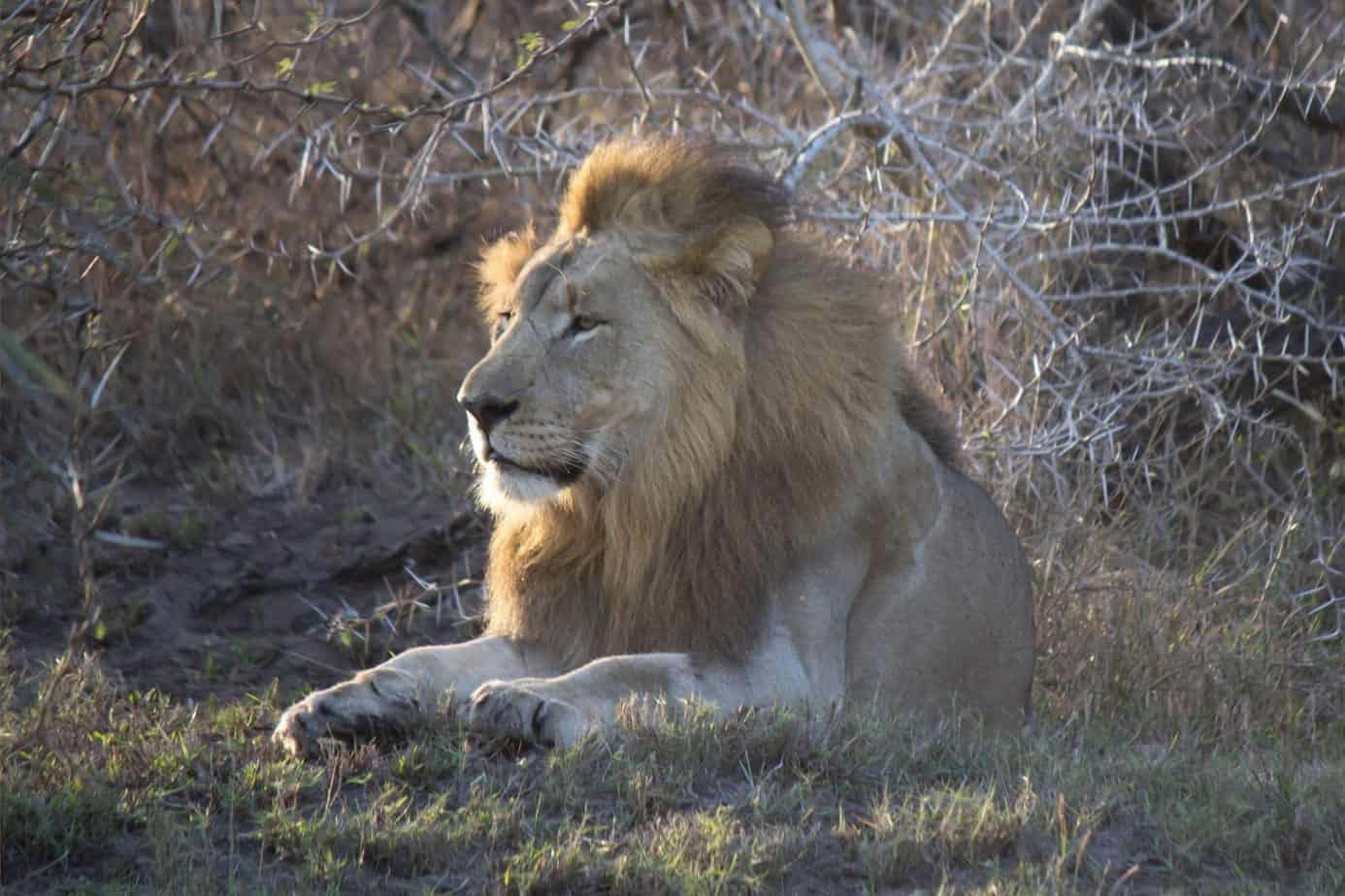 IMG 8156 2 scaled - Tembe Elephant Park